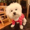 Gucci ドッグセーターふわふわ ペット服 プードル 犬服 ブランドクリスチャングッチコピー冬暖かい フレンチ ブルドッグ犬用ウェアプードル 猫服 犬猫用品 小型犬/中型犬向け おでかけ 散歩用