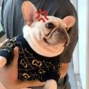 GG 犬服 ペット散歩用 冬暖かい おでかけ 犬用セーター 猫服 ドッグウェア 半袖 gg ブランド ペット用品 小型犬 テディ シュナウザー ふわふわ コピー