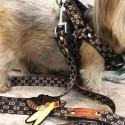 グッチ ペット 首輪 犬用 ペット用品犬 リードブランド コピー 人造繊維 中型犬 小型犬 ハーネスドッグ おでかけ用品 お散歩アイテムスーパーコピー ペット用品 おしゃれ ミツバチ通販