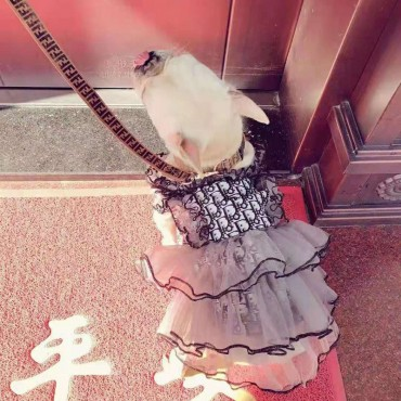Diorディオール ブランド ペット服 お洒落 レースワンピス 洋服 可愛い 通気性 抜群 小型ペット ペットウェア 愛犬 愛猫グッズ オーバーオール 綺麗 柔らかい パーティー出席 散歩