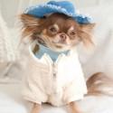 ブランドggペット服 犬服 ジャケット 犬用パーカー  洋服 秋冬服 防寒 コートふわふわ 暖かいドッグウェア 小中型犬服 猫服 かわいい ペット用品 お散歩 お出かけ