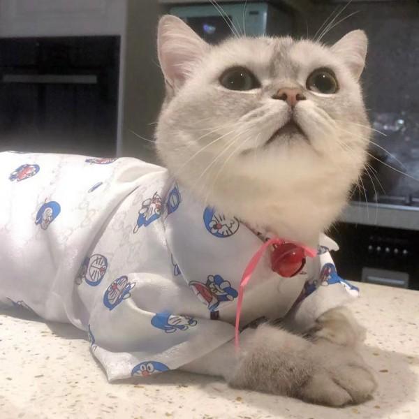 GGブランドペット服 ドラえもん コラボ 猫服 おしゃれ 犬Tシャツ ドッグウェア かわいい ドラえもん柄 薄い 通気性 かわいい 洋服 快適 ペットウェア 脱毛保護 お散歩