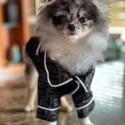 フェンディ ブランド ペット服 犬服 ロングTシャツ fendiドッグウェア FFプリント 高級感 犬の寝間着 猫のルームウェア カッコイイ ボタン付き 着脱安い お出かけ 小中型 ペット適応