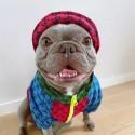 gg ブランド ペット用品 ドッグウェア 犬服 経典モノグラム 韓国スタイル GG 猫服 ファッション 春秋服 暖かい ペット洋服 犬 ジャケット ファスナー開閉 着脱安い かわいい xs-xxl
