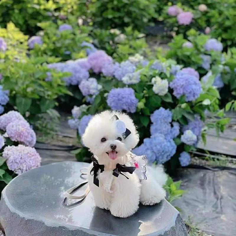 ブランドchanelシャネル犬服ドレスかわいい