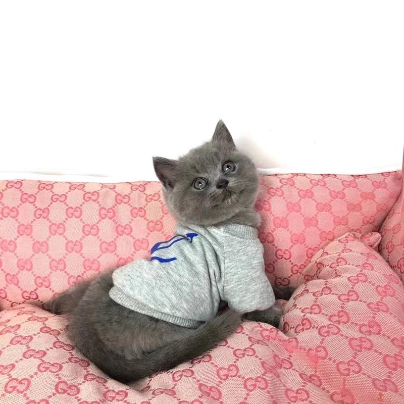ルイヴィトンブランド猫服かわいい厚手